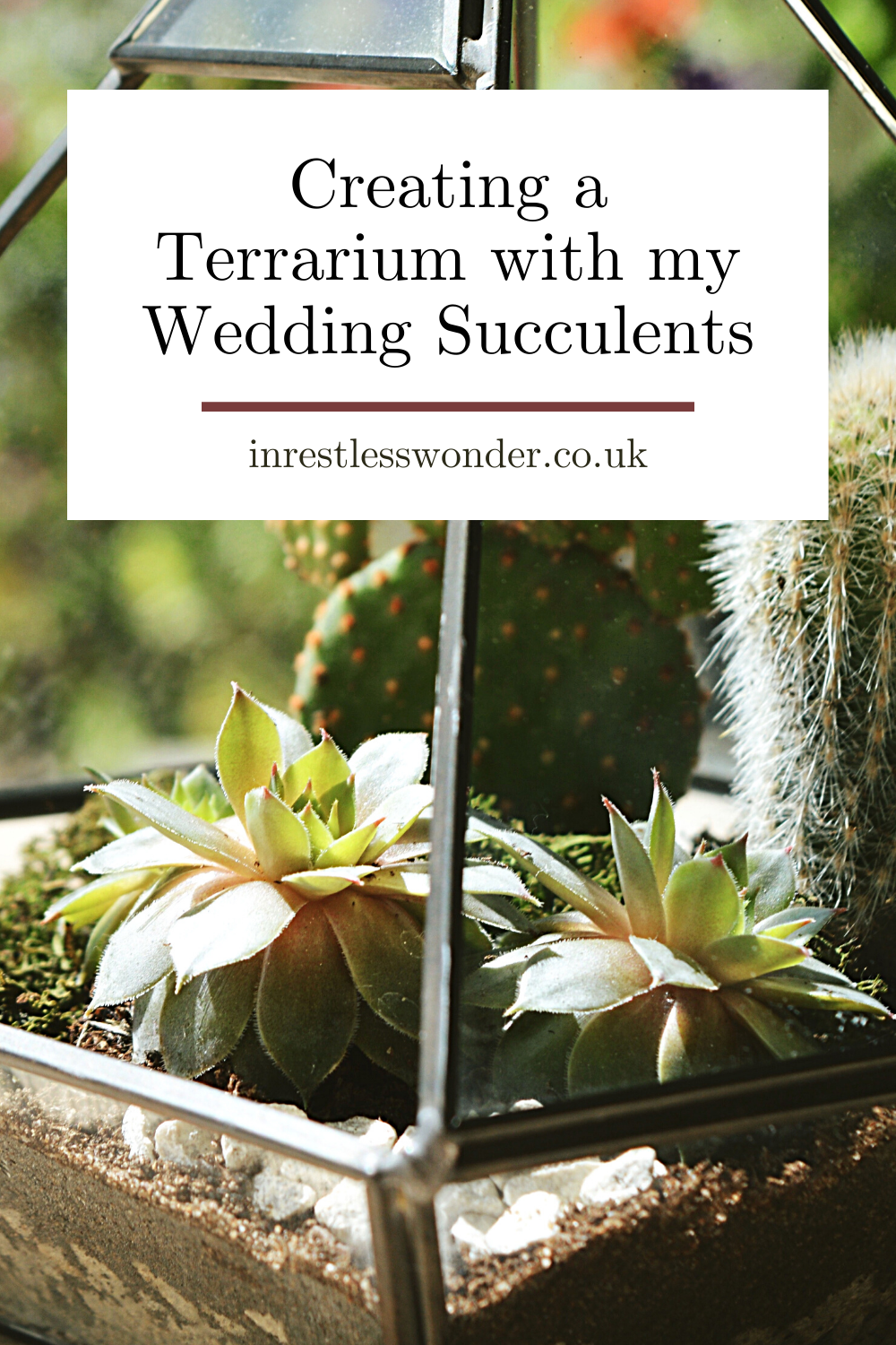 Creating a Terrarium with my Wedding Succulents